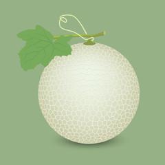 melon vector design