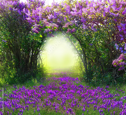 Foto op Canvas Lilac Magic spring forest