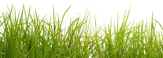 herbes sur fond blanc
