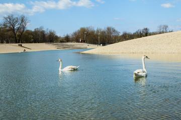 Swan on Bundek lake in Zagreb, Croatia, on Saturday morning