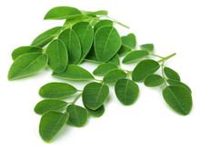 """Постер, картина, фотообои """"Moringa leaves"""""""