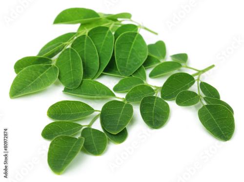 Leinwanddruck Bild Moringa leaves
