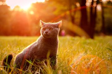 Кот на лужайке