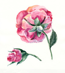 Rose and button, watercolor