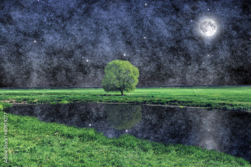 Tree under the moon