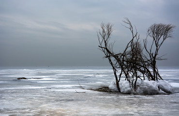 Winter landscape with trees. Frozen sea, moody sky