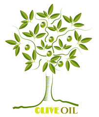 One green, isolated, olive tree with twigs with leaves and