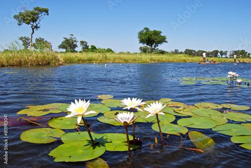 Fotobehang Rivier Okavango Delta: Water lilies along a waterway, Botswana Africa
