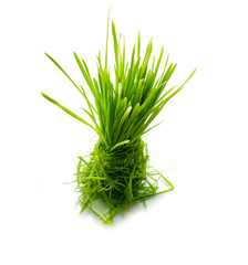 figure green grass isolated
