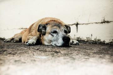 chien fatigue