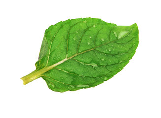 Leaf of mint isolated on a white.