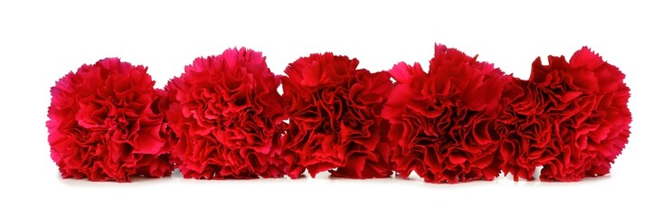 Border arrangement of red carnation flowers