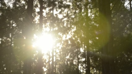 Sun flare in forest at the Sunshine Coast in Queensland.