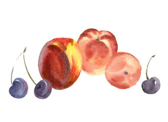 Fruits. Watercolor painting.