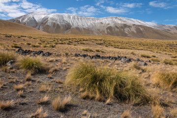 tussock growing on slopes in Southern Alps in New Zealand