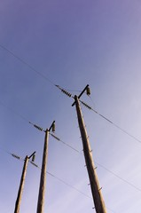 Electric Poles on Sunny Day