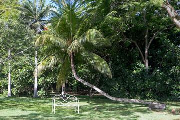 Banc dans un jardin tropical