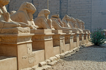 Avenue of  sphinxes in temple of Amun-Re  (Karnak, Luxor, Egypt)