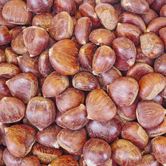 raw chestnuts closeup at the local market