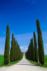 Viale toscano con cipressi