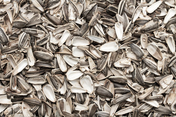 shells from sunflower seeds background
