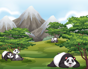 Pandas in forest