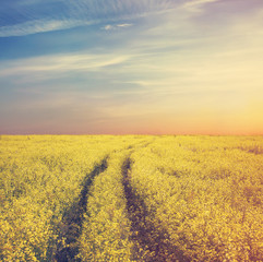rapeseed field, instagram retro style