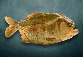 piranha imbalsamato