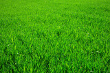 grass texture mouse pad