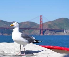 Westmöwe vor der Golden Gate Bridge