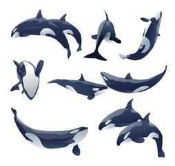 shamu killer whale show vector set illustration