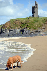 wild atlantic way castle and dog