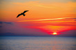 Leinwanddruck Bild - seagull silhouette in an orange sky
