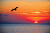 seagull silhouette in an orange sky - Fine Art prints