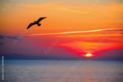 Foto op Aluminium Vogel seagull silhouette in an orange sky