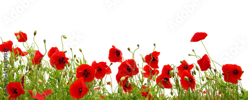 Aluminium Bloemen red poppy