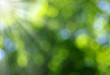 Green blurred background - 81020883
