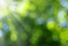 "Постер, картина, фотообои ""Green blurred background"""