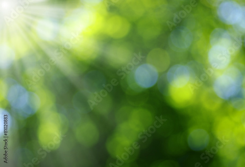 Foto op Canvas Bossen Green blurred background