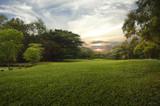Fototapety Green grass field in public park,