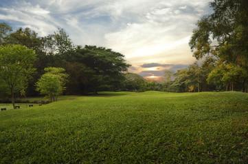 Green grass field in public park,