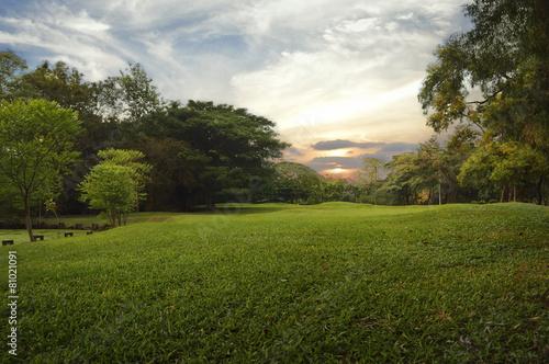 Foto op Canvas Tuin Green grass field in public park,