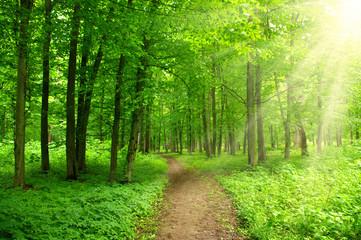 sunlight forest © Alekss