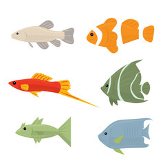 Collection of tropical fish