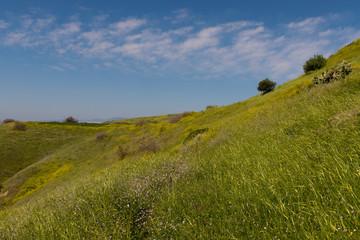 Wiesen Wanderung Landschaft