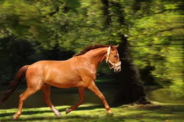 Pferde 134