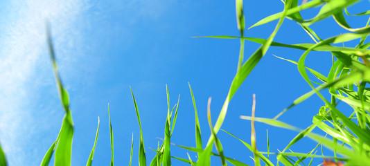 Cornice con fili di erba