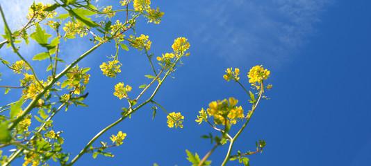 Template di fiori di campo
