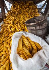 Barn of corn cobs