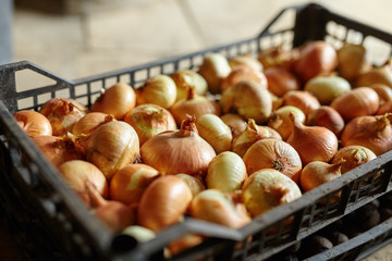 Crate of onions